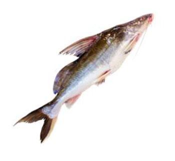 Ayre Fish