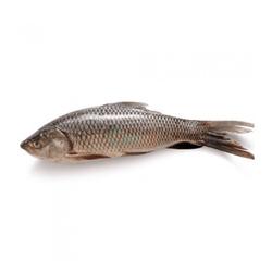 Ruhu Fish