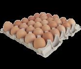 PP Eggs