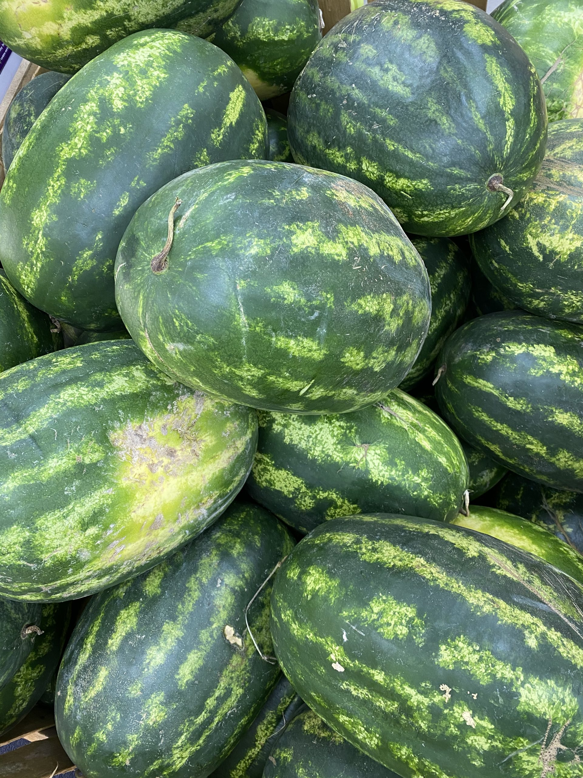 Moroccan Watermelon (Large)